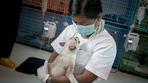 Cuddling a cat at the Soi Dog shelter