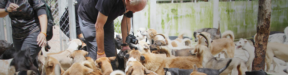 Soi Dog Foundation is fighting the Asian dog meat trade