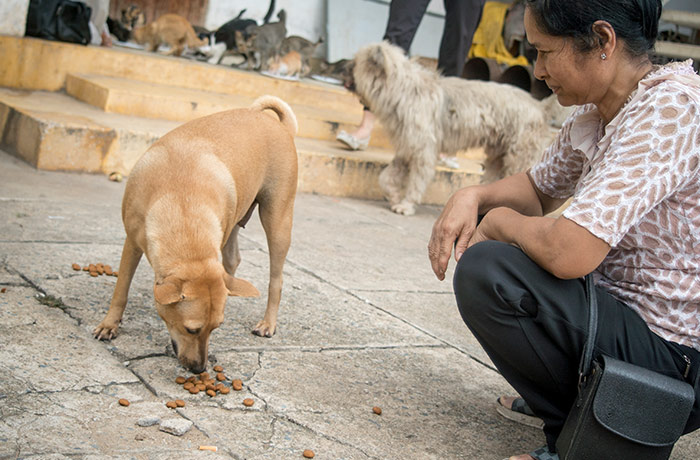 Feeding dogs and cats at the pagoda