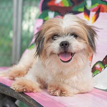Dogs For Adoption | Soi Dog Foundation