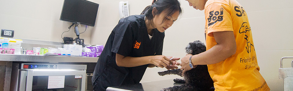 Veterinarian treating a new patient in the dog hospital