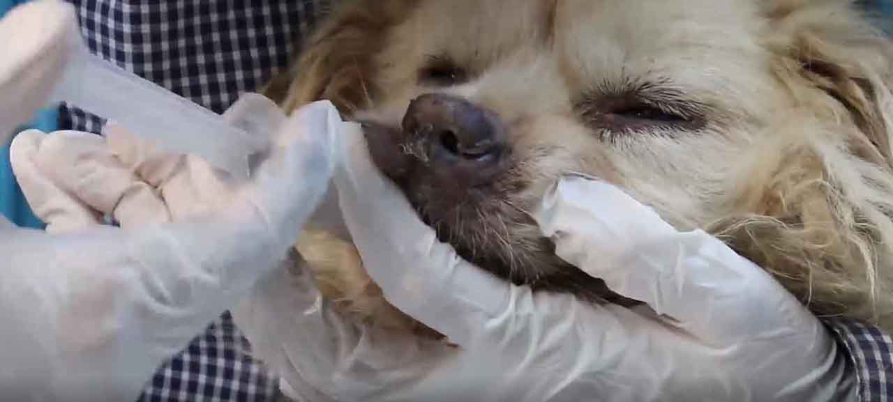 A rescued dog receives medical treatment