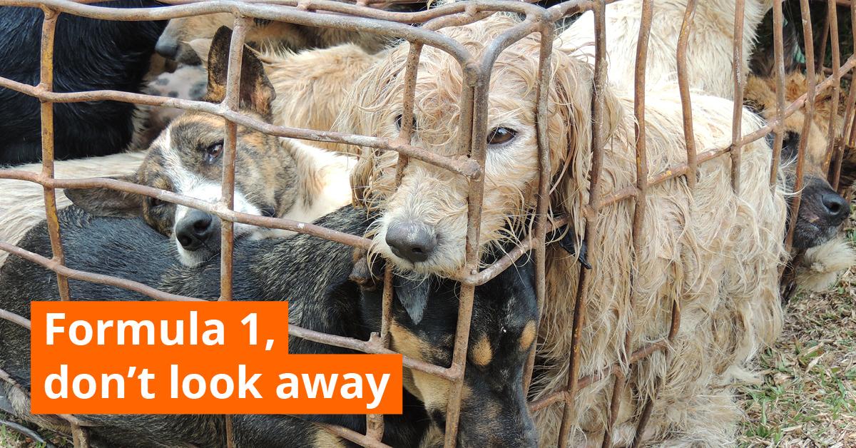 Help Stop The Horror In Hanoi!