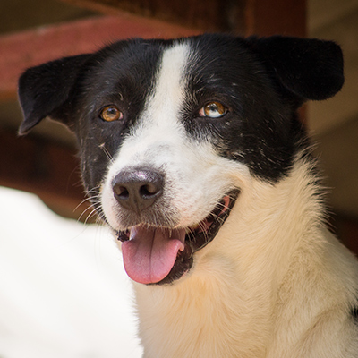 Chacris: Rescued From Cruelty, Saved By Soi Dog Supporters