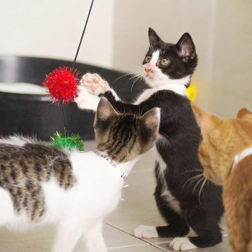 Cats playing with toys donated by supporters from all over the world