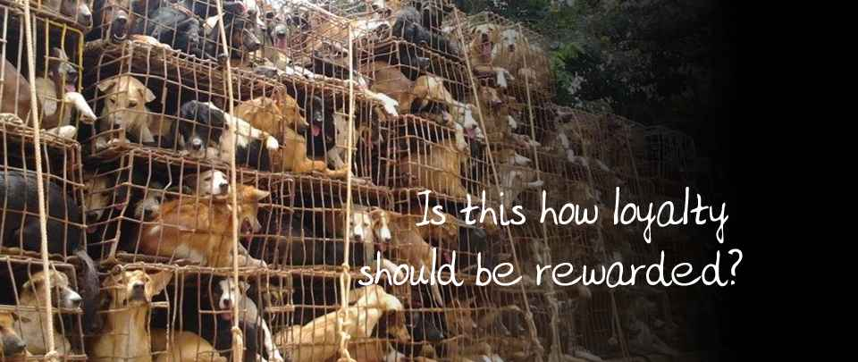 Ending the Dog Meat Trade
