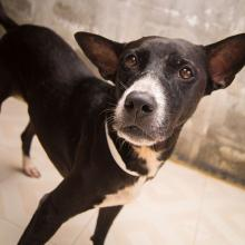 Adopt Drossel ( already in the USA )