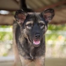 Adopt Irina