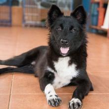 Adopt Payna